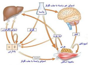 diabet_bankmaghale.ir_